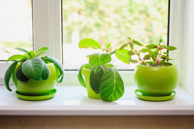 绿色罐的植物在窗台 库存图片