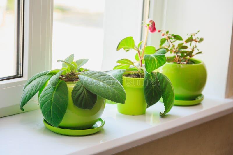 绿色罐的植物在窗台 免版税库存照片