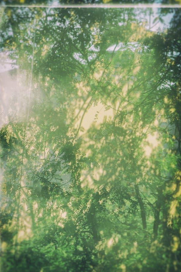 绿色背景用浮萍 库存图片