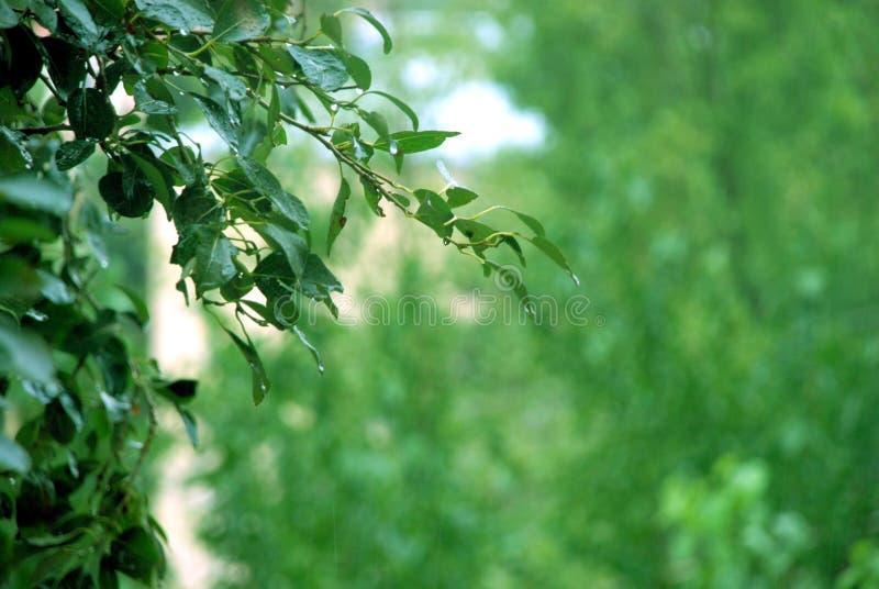 绿色背景 绿色迷离纹理和背景 一片绿色叶子的抽象背景纹理 库存图片