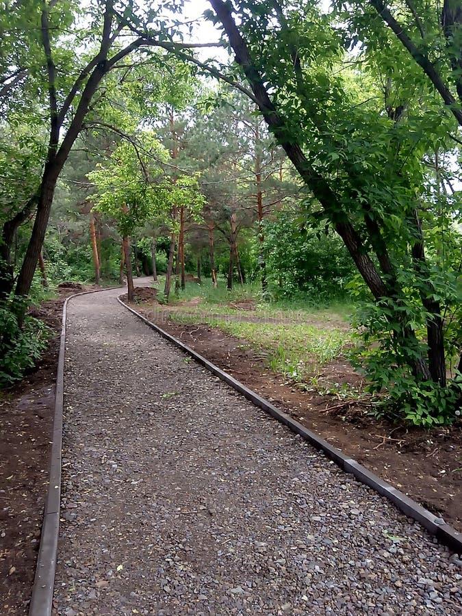 绿色胡同在公园 免版税图库摄影