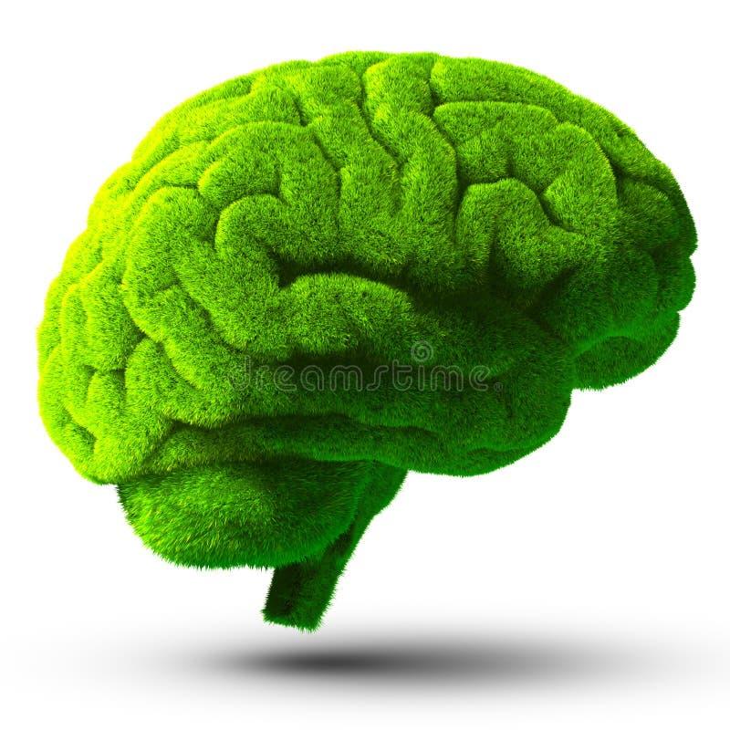 绿色脑子 库存例证