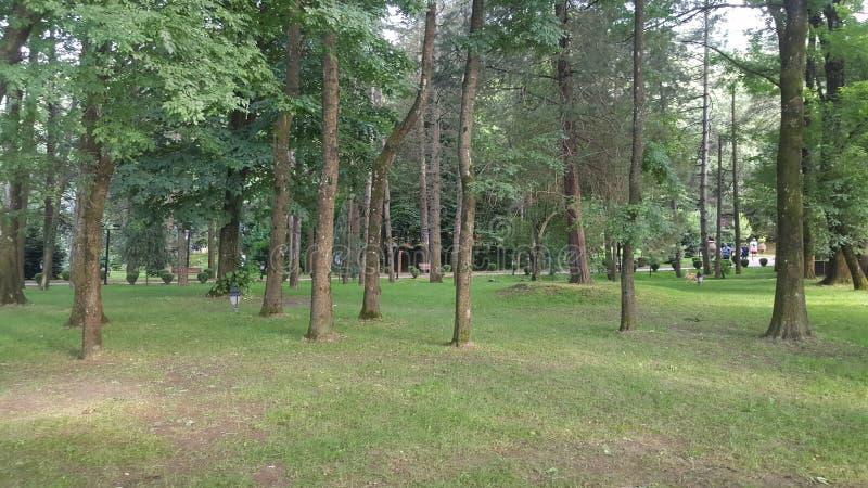 植物和树木 库存图片
