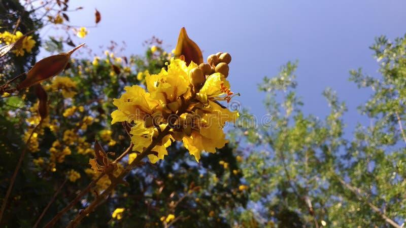绿色自然的花 免版税库存照片