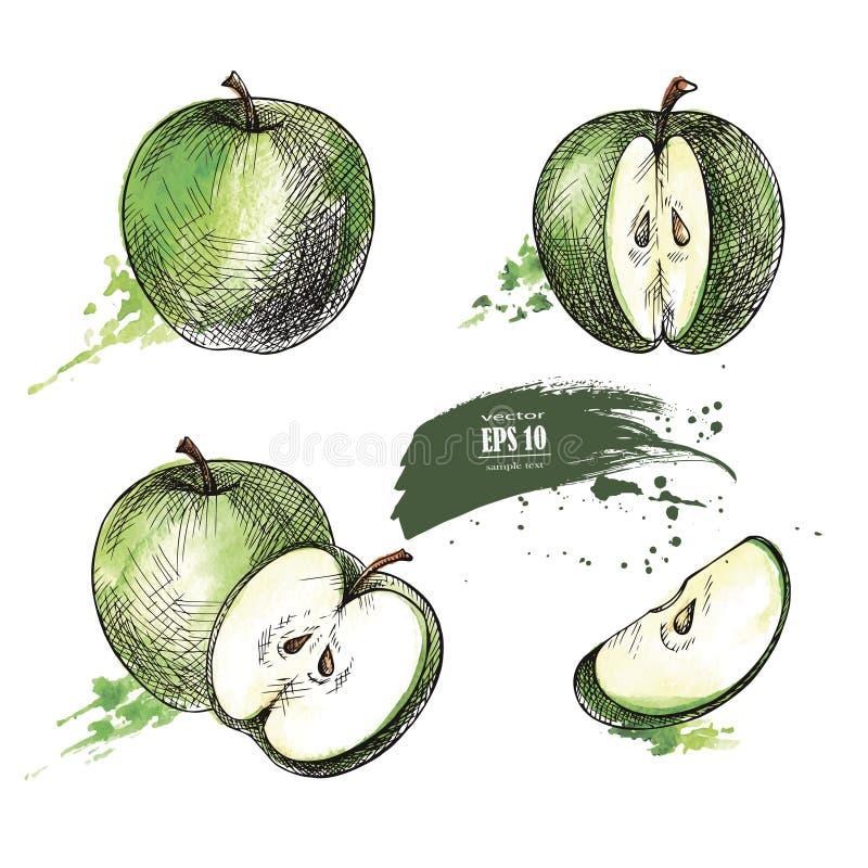 绿色苹果手拉的集合 库存例证