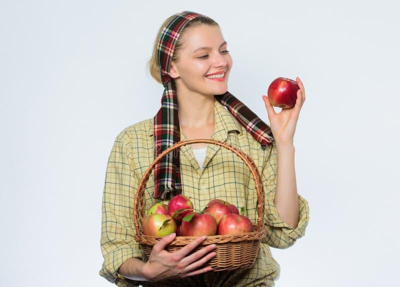 绿色苹果篮子 春天收获夏天果子 有机和素食 健康牙 果树园,花匠女孩与 图库摄影