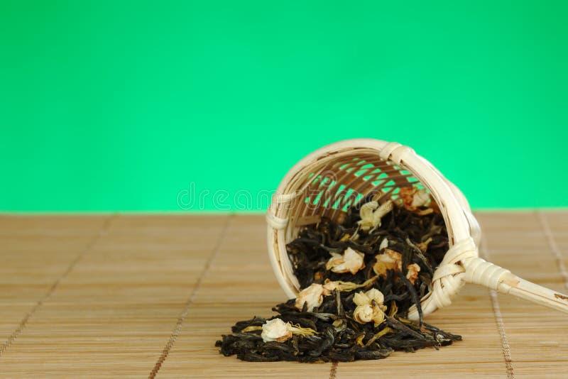 绿色茉莉花离开茶 库存照片