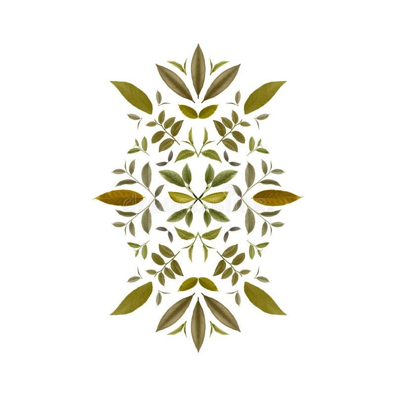 绿色茶叶拼贴画  茶背景7 向量例证