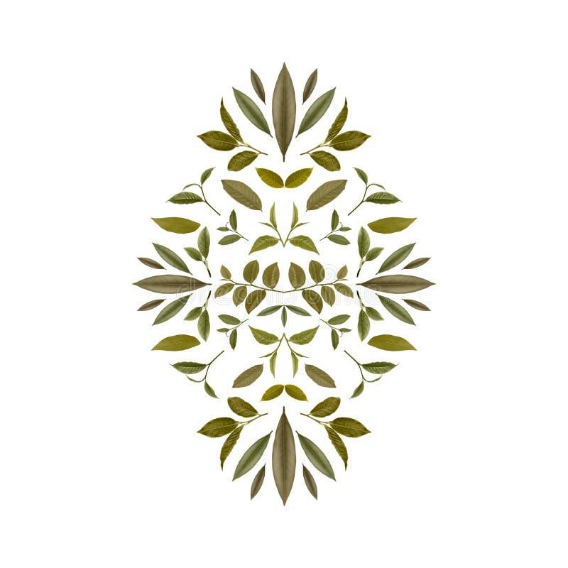 绿色茶叶拼贴画  茶背景9 库存例证