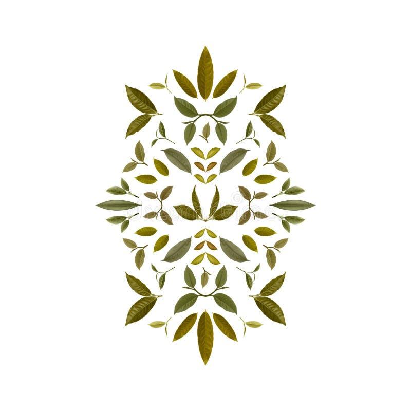 绿色茶叶拼贴画  茶背景11 库存例证
