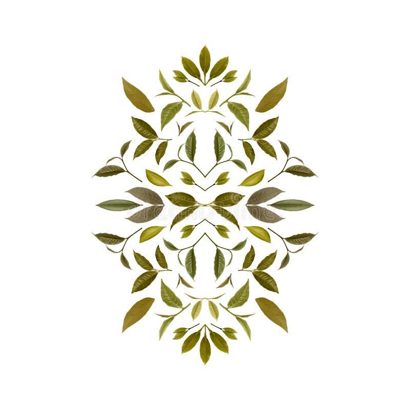 绿色茶叶拼贴画  茶背景12 皇族释放例证