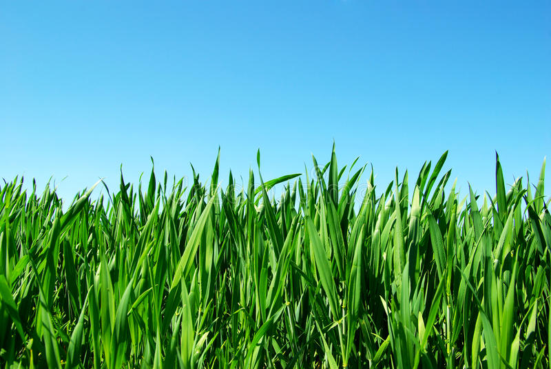 绿色草坪 库存照片