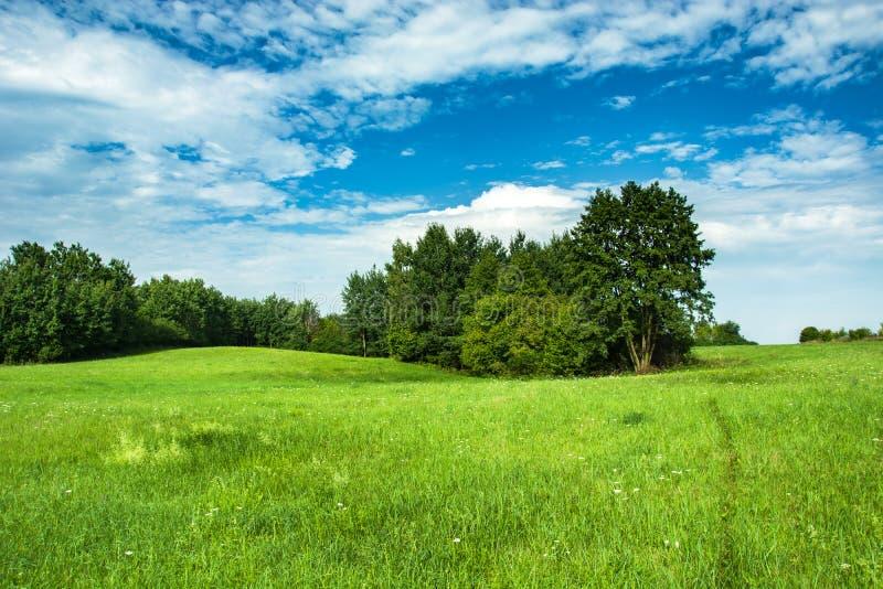 绿色草甸和灌木、天际和天空 库存照片