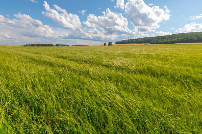 绿色草甸在与云彩的蓝天下 库存图片
