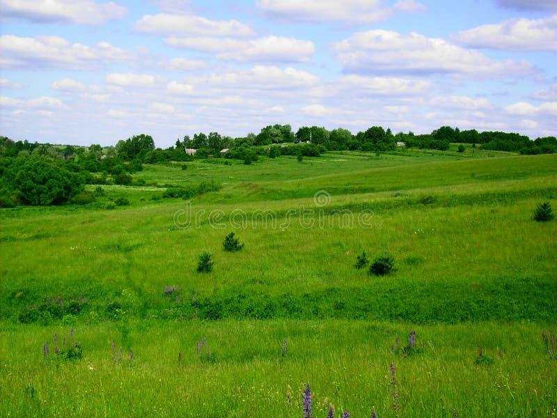 绿色草甸在村庄在夏天 图库摄影