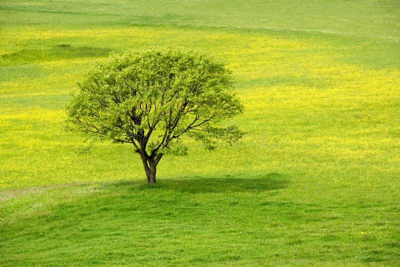绿色草甸春天结构树 免版税库存照片