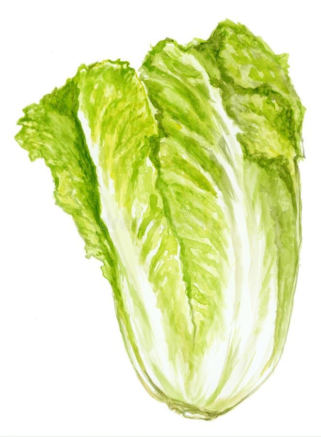 绿色莴苣 库存例证