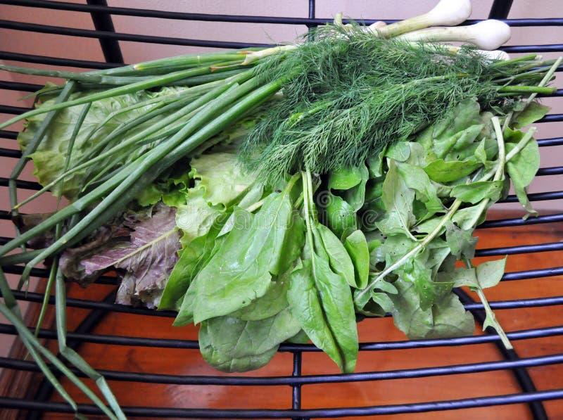 绿色菜 设置各种各样的季节性绿色菜 免版税图库摄影