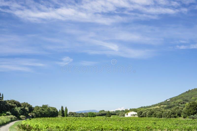 绿色葡萄园和一个房子在山旁边在美丽的白色蓬松云彩和生动的天空蔚蓝下小波浪在一个夏天 免版税库存照片