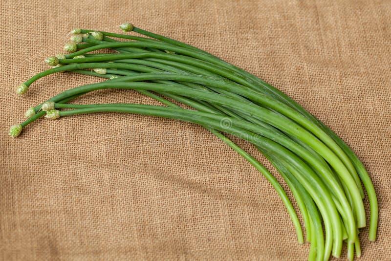 绿色蒜细香葱 图库摄影