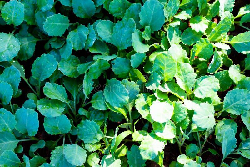绿色蔬菜 库存图片