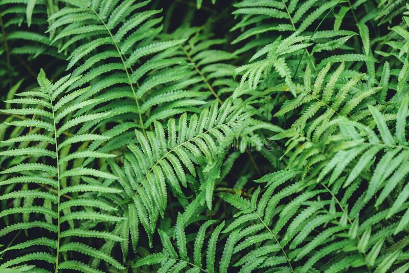 绿色蕨植物湿潮湿在热带雨林里 库存照片