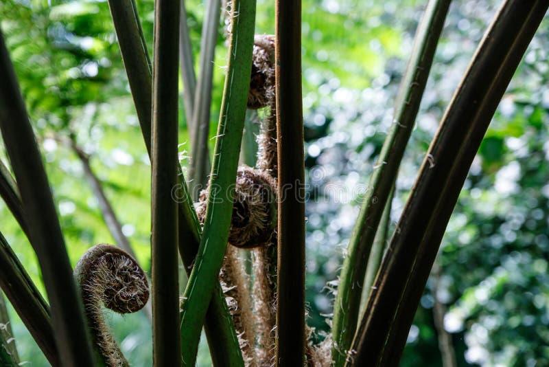 绿色蕨瓣宏观照片  植物蕨开了花 在绿色植物背景的蕨  库存照片