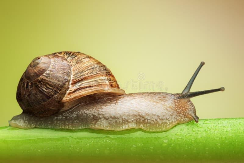 绿色蜗牛词根 库存照片