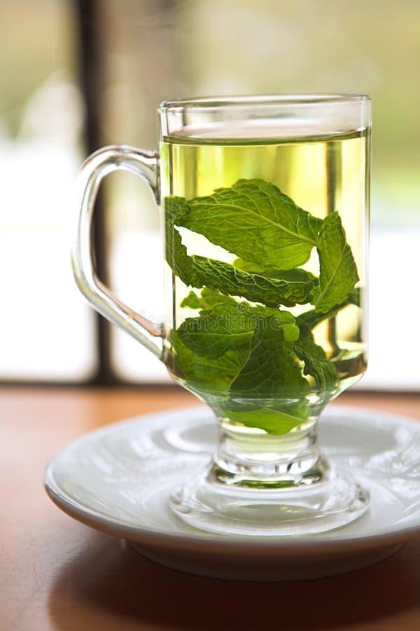 绿色造币厂的茶 免版税库存照片