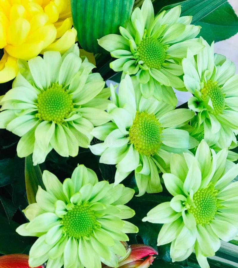 绿色郁金香的无缝的样式在绿色背景的 向量例证