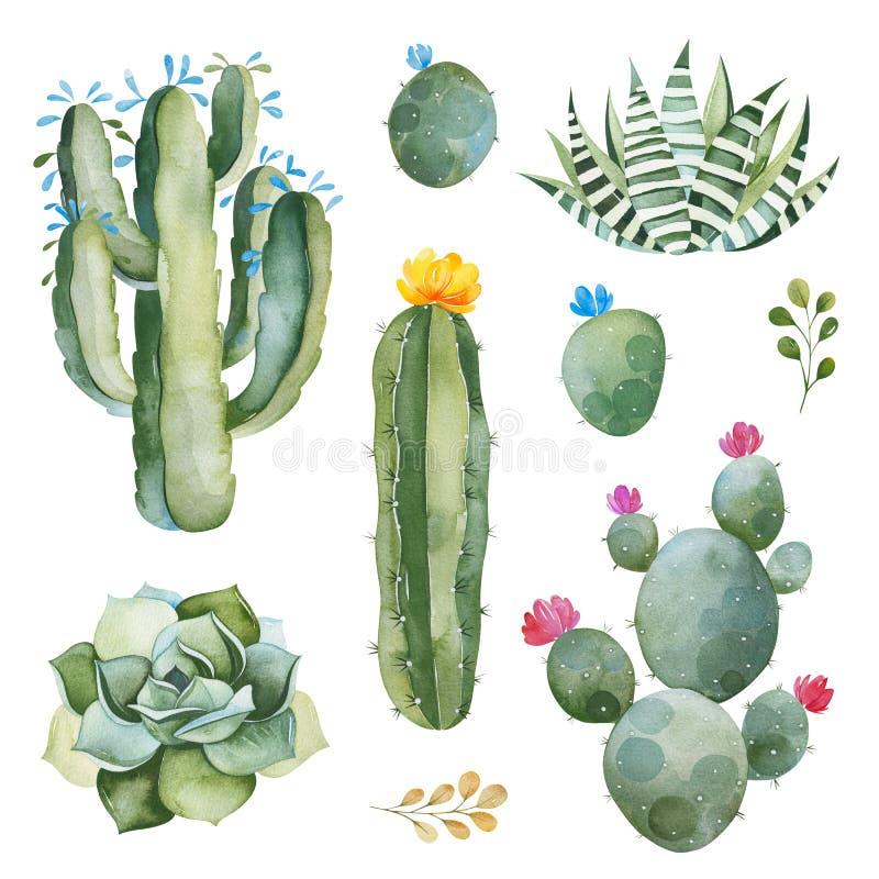 绿色集合用水彩仙人掌、多汁植物和多彩多姿的花 皇族释放例证