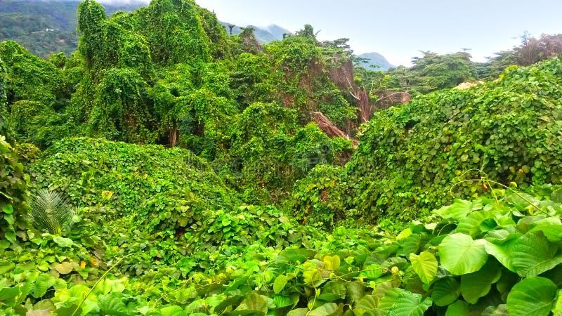 绿色雨林和山的看法在seychel 免版税库存图片