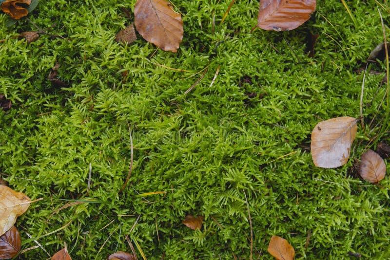绿色青苔和叶子在森林土壤 免版税库存图片