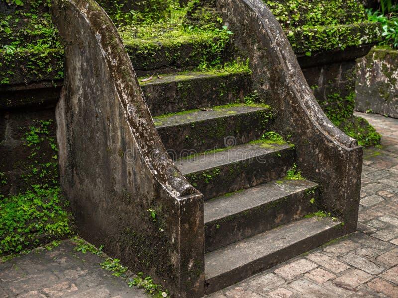绿色青苔和植物盖了老水泥楼梯 免版税库存照片