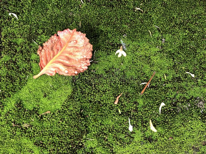 绿色青苔和红色叶子 库存照片