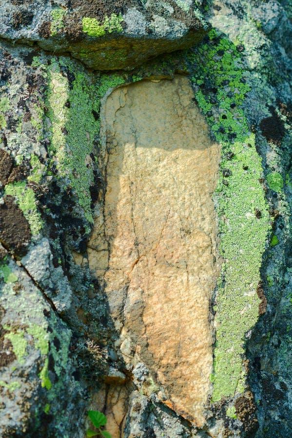 绿色青苔在岩石增长 免版税库存照片