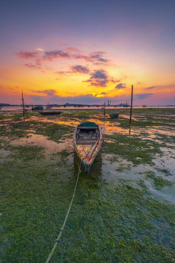 绿色青苔处于低潮中 免版税库存照片