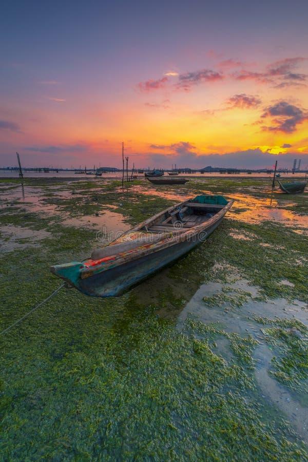 绿色青苔处于低潮中 免版税库存图片