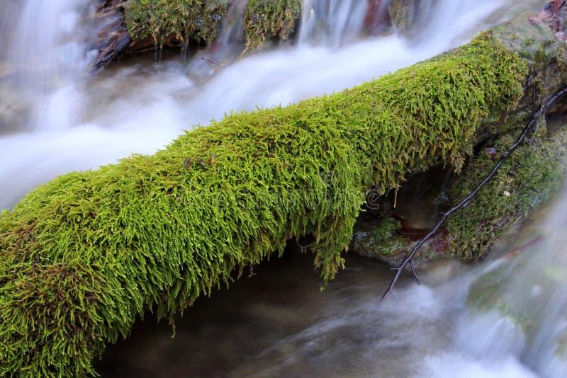 绿色青苔山流 库存照片
