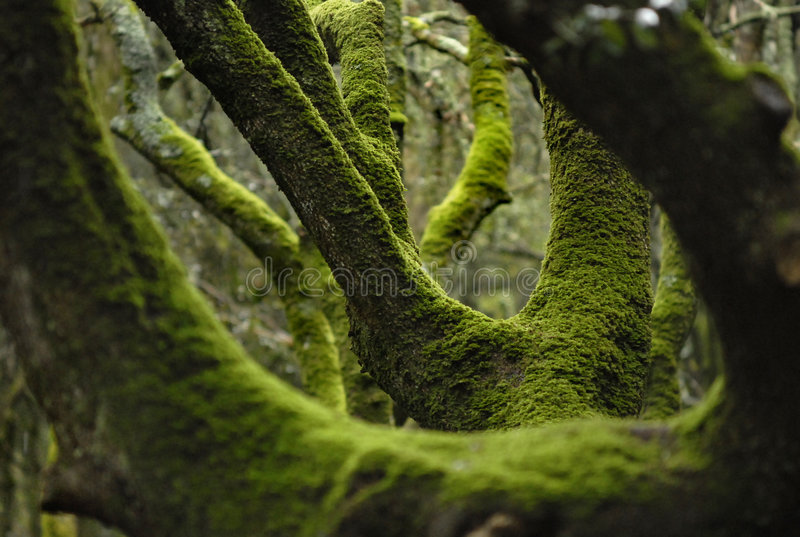 绿色青苔结构树 免版税图库摄影