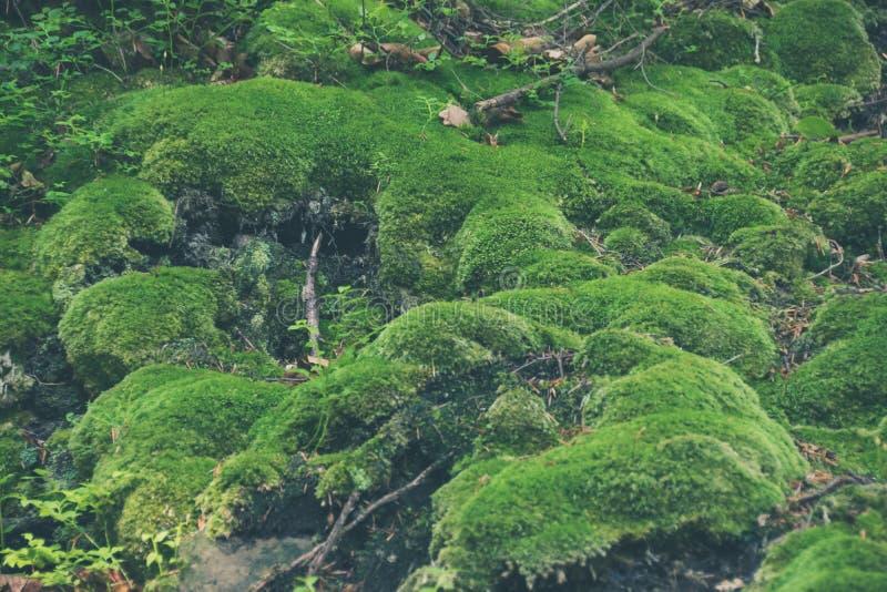 绿色青苔背景 库存照片