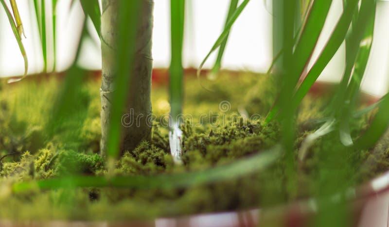 绿色青苔被盖的花盆 免版税库存照片