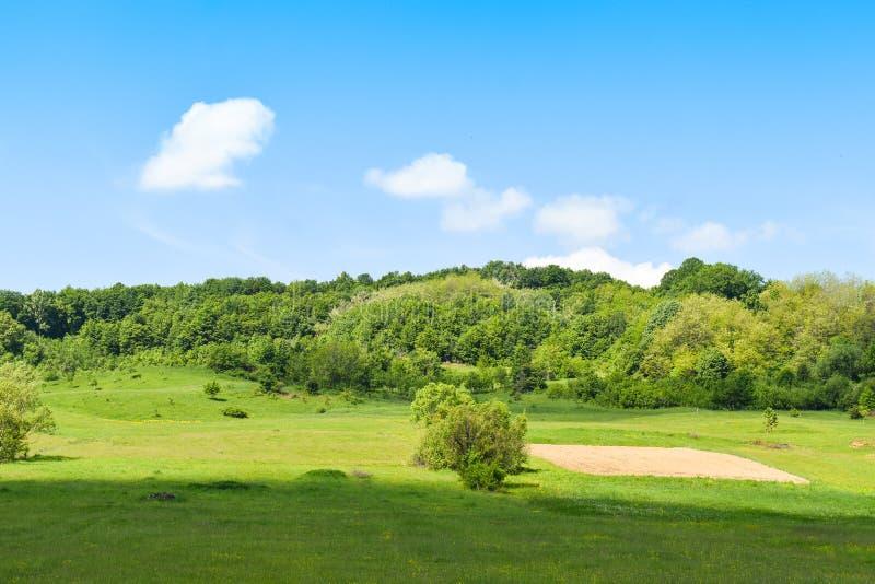 绿色领域和树在与蓝色明亮的天空和白色云彩的一个晴朗的夏日 图库摄影