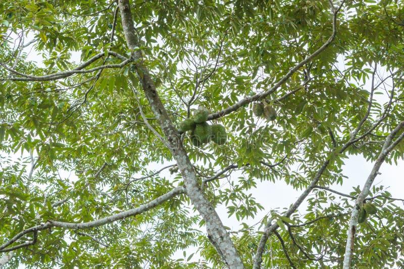 绿色领域在Pulau槟榔河 库存照片