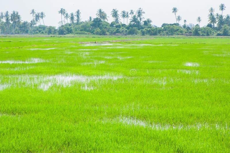 绿色领域在Pulau槟榔河 免版税库存图片