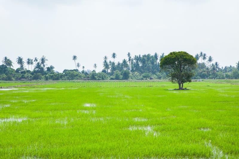 绿色领域在Pulau槟榔河 免版税库存照片