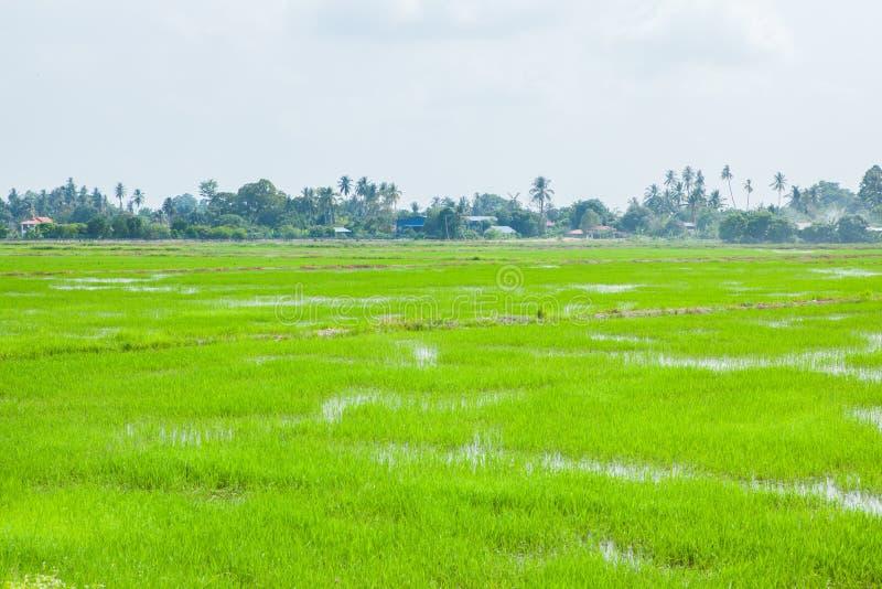绿色领域在Pulau槟榔河 库存图片
