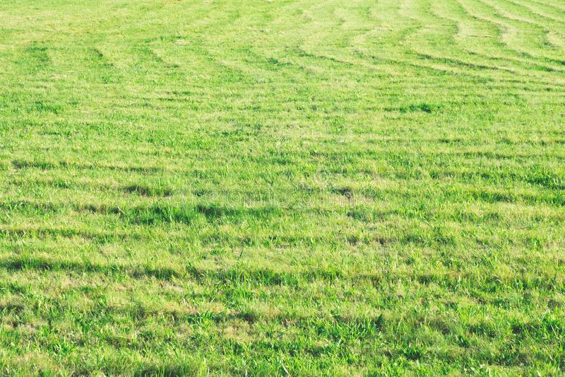 绿色领域,一个联合收割机的踪影在领域,自然本底,绿草的 免版税库存图片