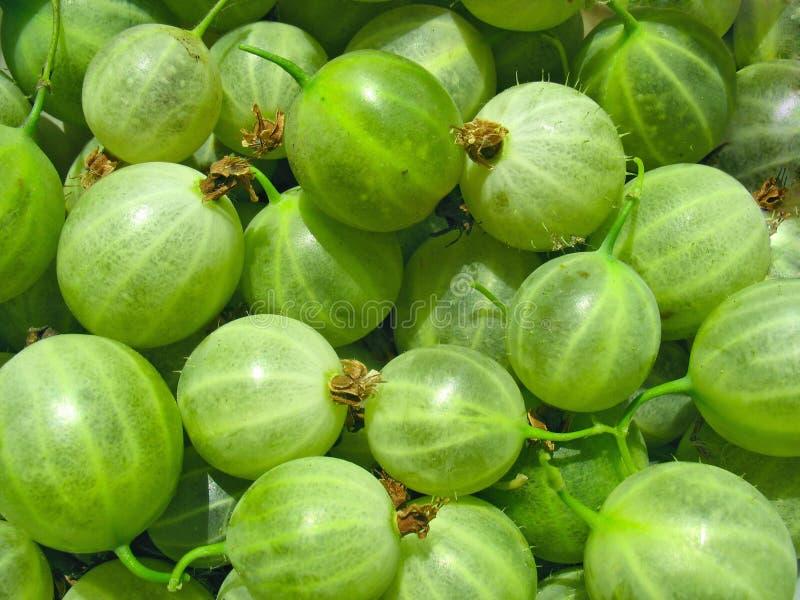 绿色鹅莓关闭,浆果背景 免版税图库摄影