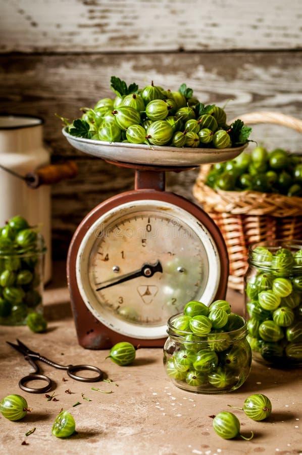 绿色鹅莓 库存图片
